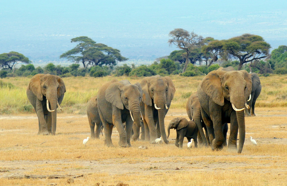 Kenya 2014_0171, crop.jpg
