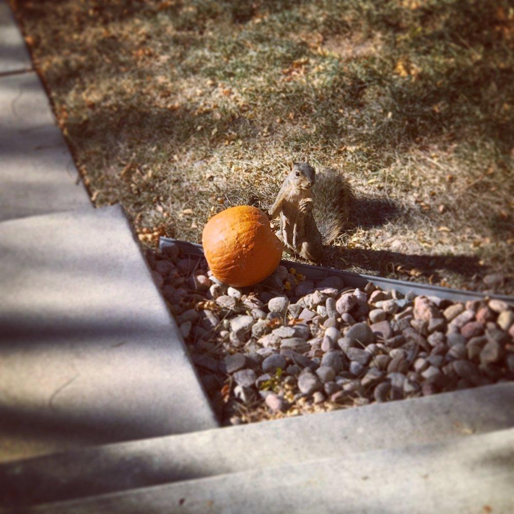 The last of my Halloween Pumpkin...eaten by a neighborhood thief.