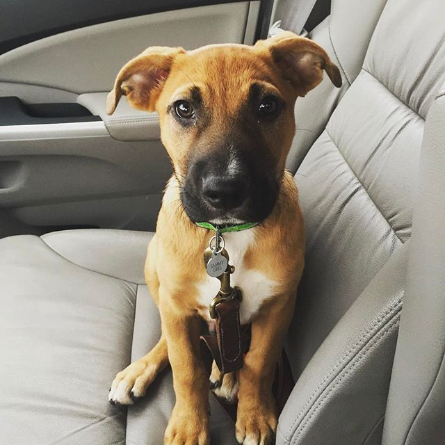 #sammygrix on his first day of school. #nationalpuppyday