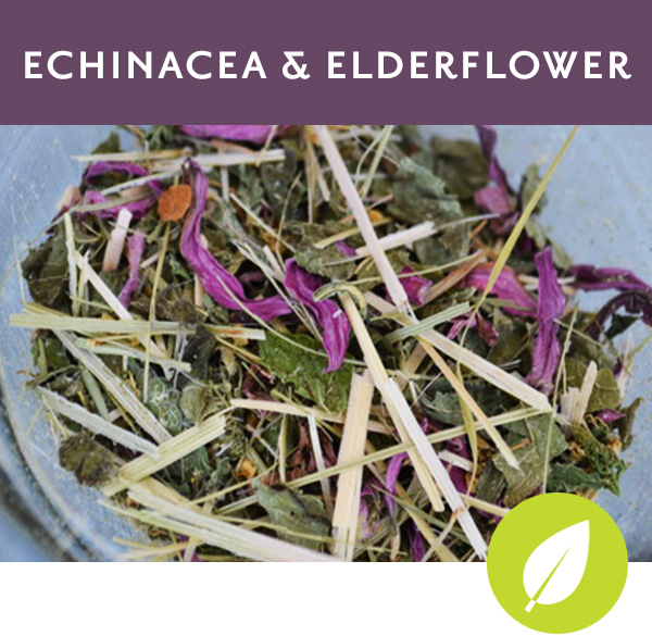 ECHINACEA & ELDERFLOWER Herbal tisane with oatstraw, echinacea flower and leaf, elderflower and spearmint