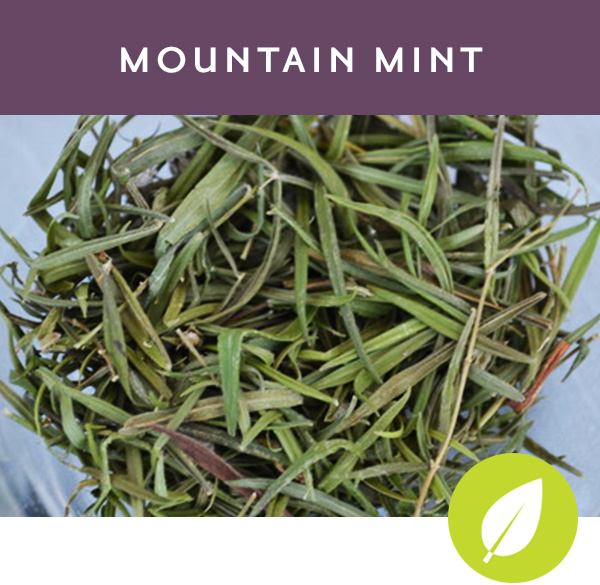 MOUNTAIN MINT Herbal tisane with mountain mint, peppermint and spearmint