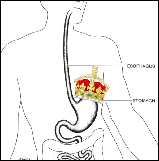 Stomach Monarch.jpg