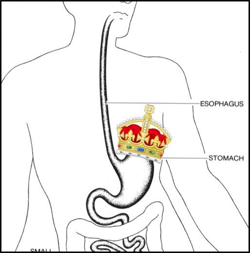 Stomach Monarch.jpg