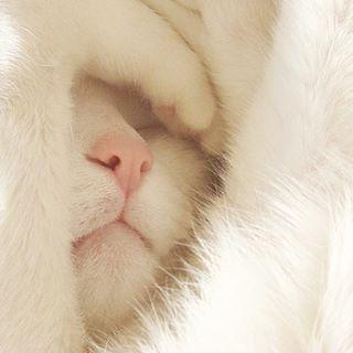 I woke up like this... #iwokeuplikethis #kitten #adorable #sleepyhead