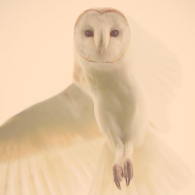 Dancin' to a new beat. #owl #pink #pastel #spiritanimal #fly #dance #nature