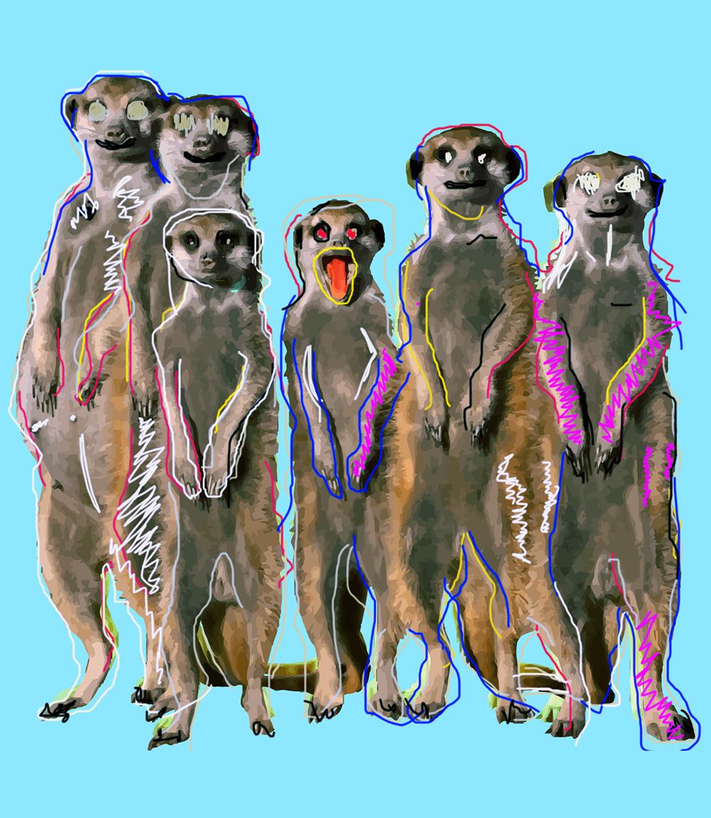 Meerkat-24x36-Border.png