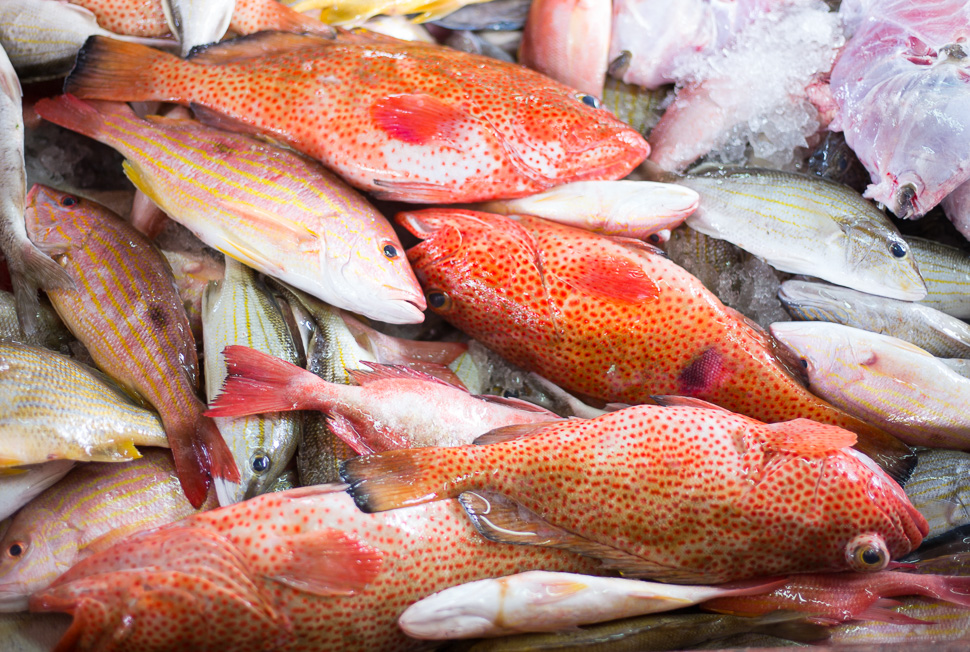 L'arrivage du jour à la Poissonerie / Catch of the day at the fish market - Gustavia