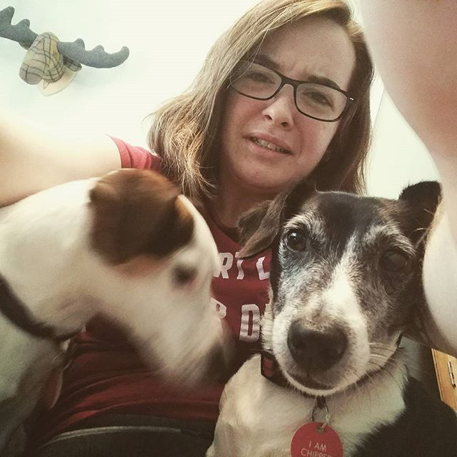 Working hard? Or hard to work? Tiny dogs get everywhere when you're working from home. #workingfromhome #workinghard #inmyway #laptopdogs #jackrussell #halp