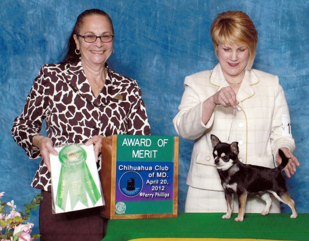 Congratulations to Cooper and Kim! They reeled in an Award of Merit at the CCMD Specialty Show, 4/20/12, under Judge Mrs. Joan Goldstein.