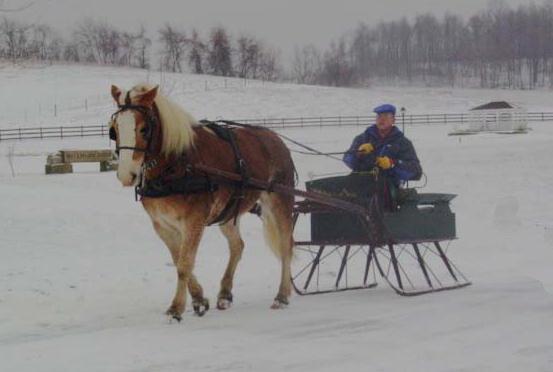 sleigh1.jpg