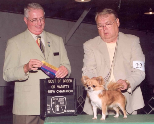 CH Hallmark's Wrap It Up (Wrapper)  Wrapper finished with a big bang! He went BOV over the number one ranked L.C. Chihuahua.