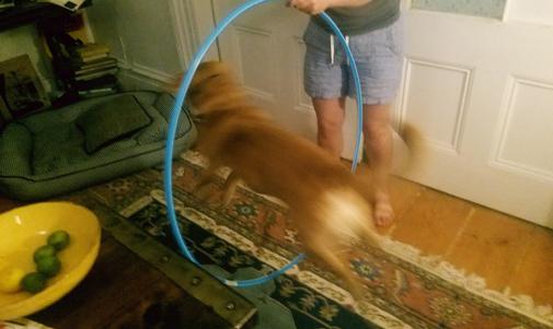 The hoop! The hoop! The hoop is on fyah!