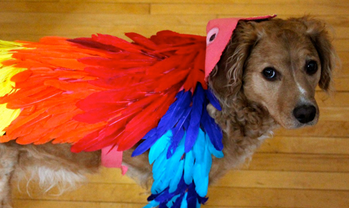 Just a dog dressed as a parrot? Or a  parrot  dressed as a dog dressed as a parrot? (Okay probably the first one.)