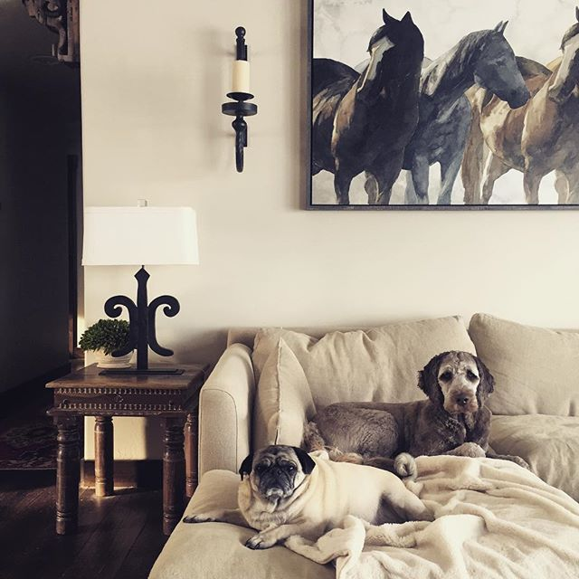 People who don't let dogs on furniture, arent my kinda people -me  #dogsoncouches #interiors #uttermostdesigncontest