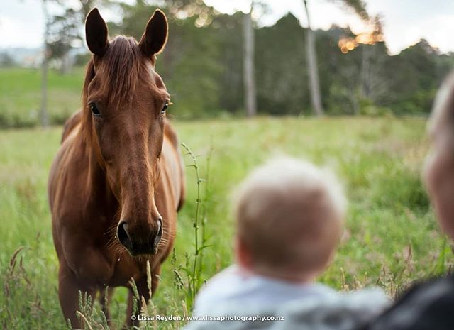 Introducing a new friend. . . . #babiesofinstagram #portraitphotography #horsesofinstagram #horseandbaby #nzbaby #babyphotography #aucklandphotographer #petsandbabies #nzhp