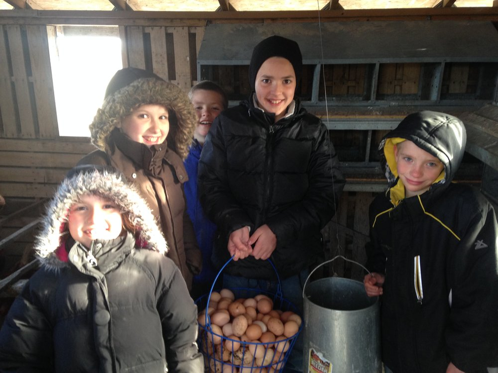 Our oldest children helping gather eggs in April in Minnesota on the CSA Farm we were living at.