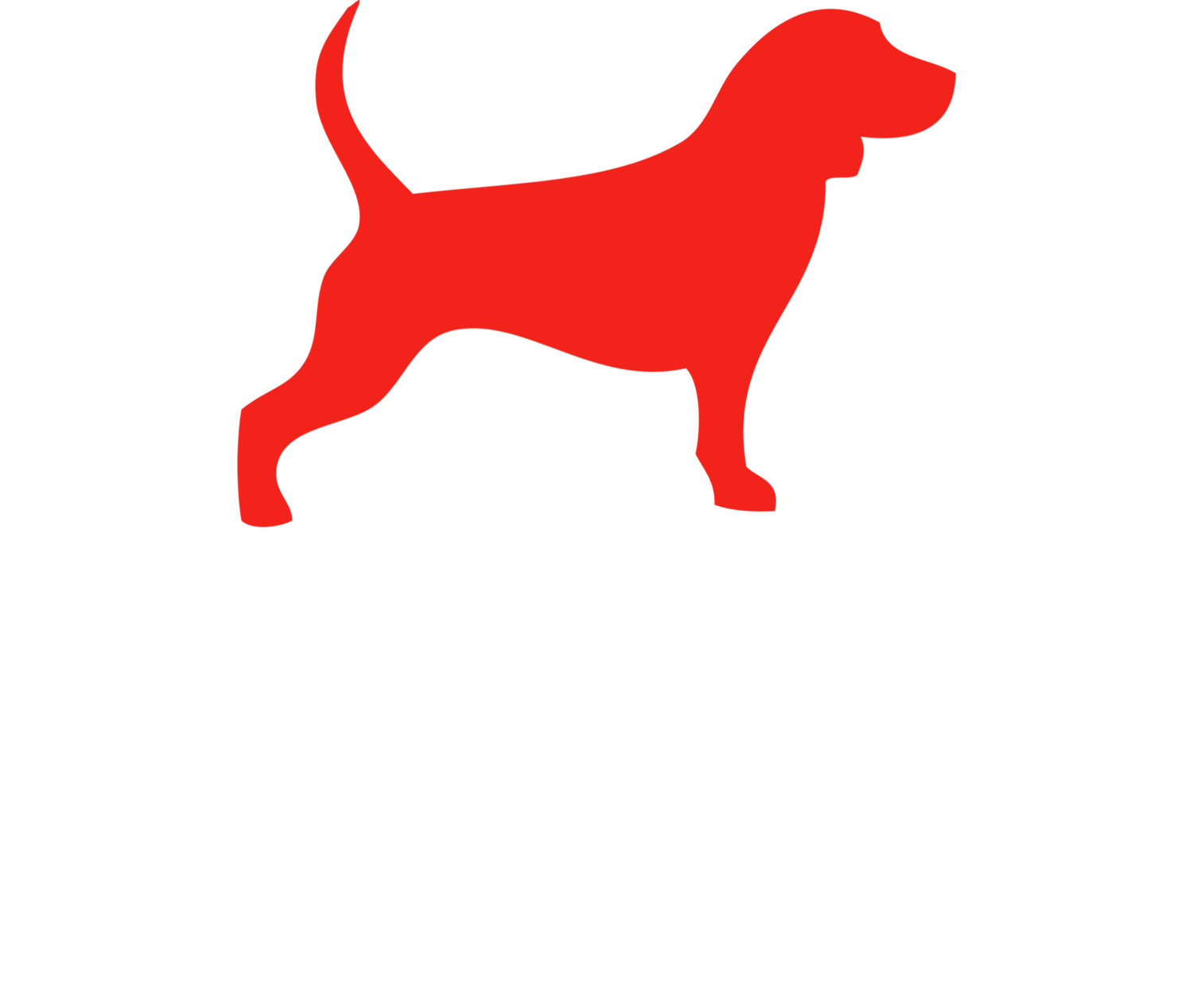 wonder dog studio