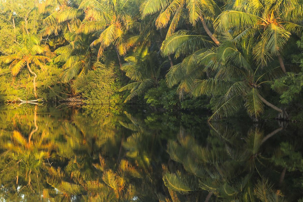 The Magic Pond by Alessandro Sarno.