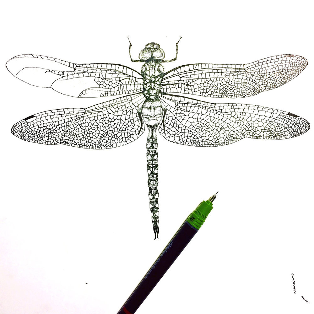 Dragonfly step 4.jpg