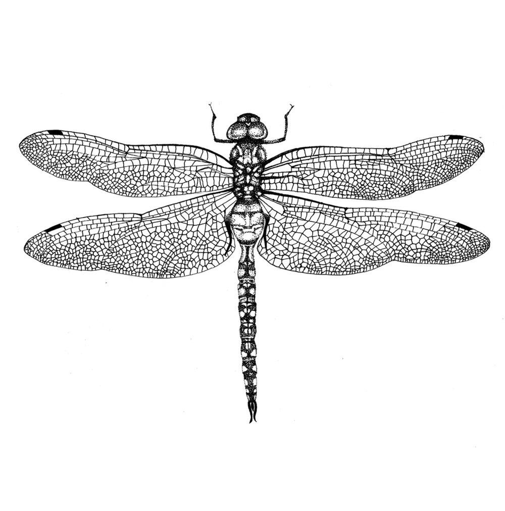 dragonfly final.jpg