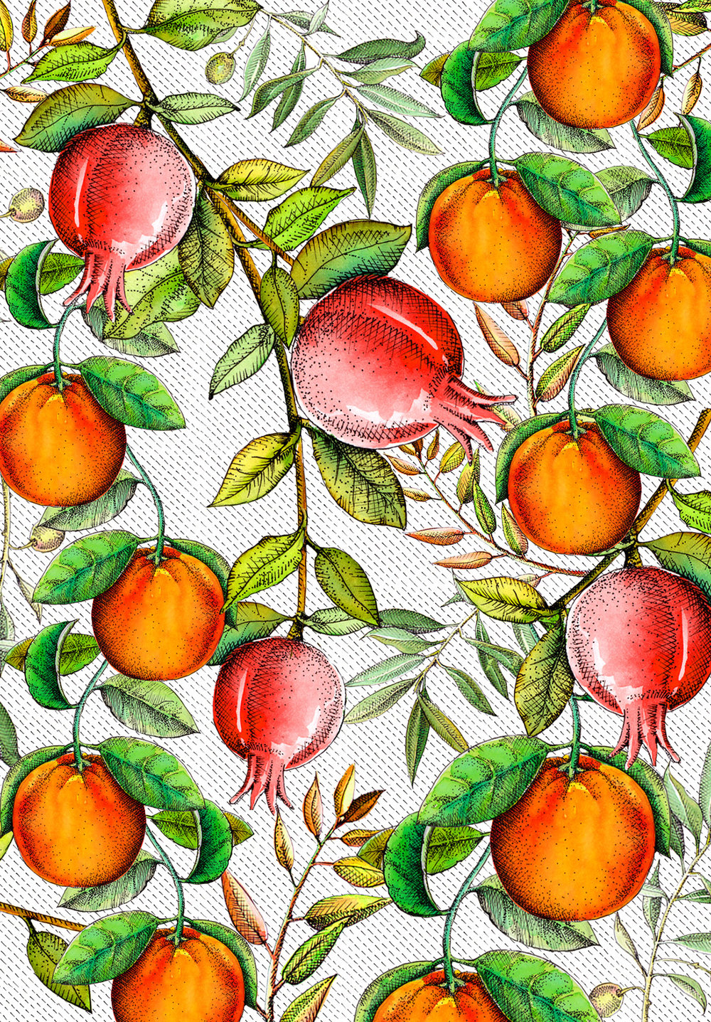 Winter fruits compilation.jpg