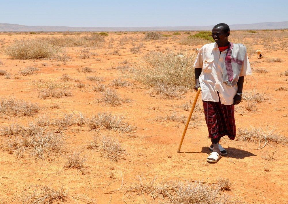 Image: Sahara Green Company
