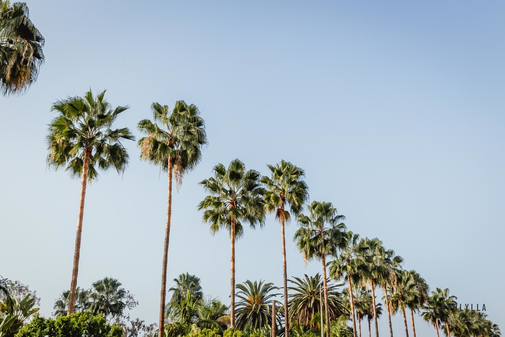 Los Angeles CITY GUIDE -
