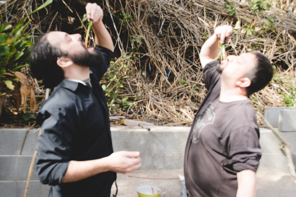 Josh, left, and Abel participating in a very local, very fun Catalonian tradition that revolves around eating a spring-onion-like vegetable fresh off the barbecue.