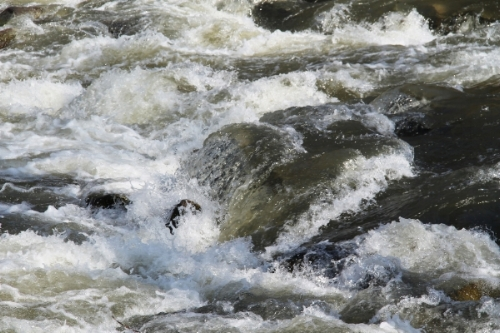 image river rapids shutterstock_434912422.jpg