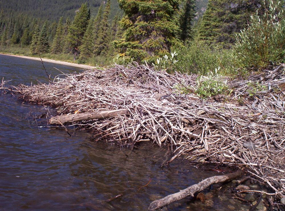 Beaver dam, Denetiah Provincial Park
