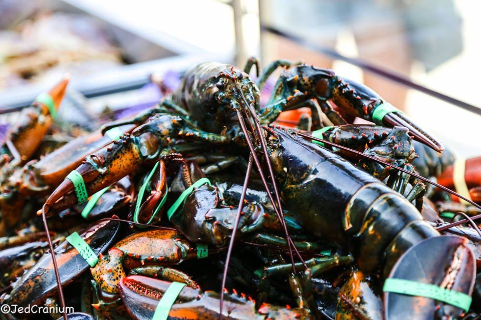 lobster - solo foods.jpg