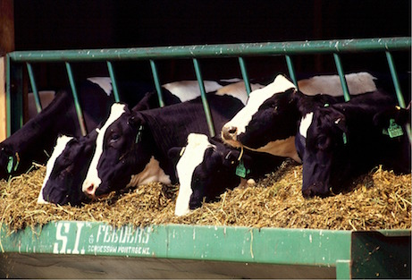 Feed makes up 50% of the cost of our meat -