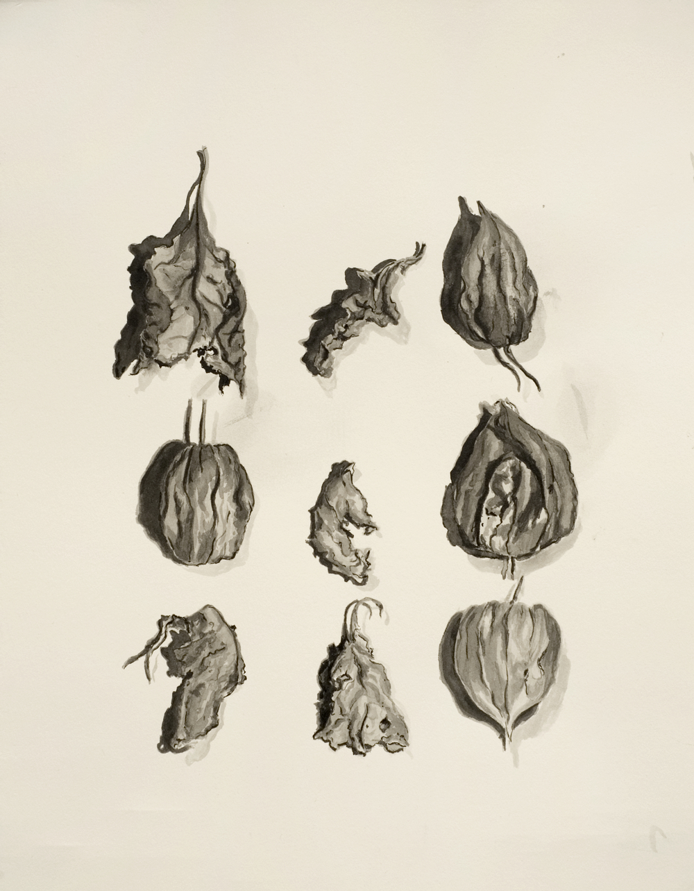 """Ink Study of Chinese Lanterns i"""