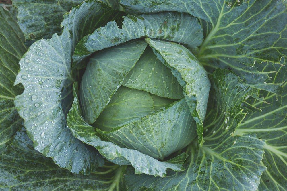 bright-cabbage-color-134877.jpg