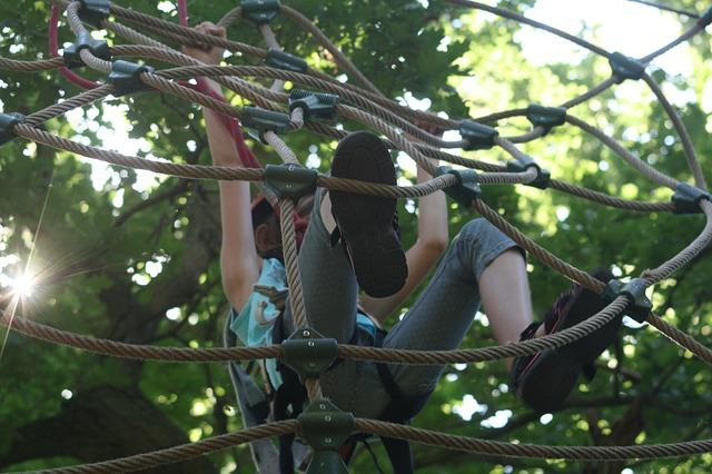 climbing-forest-906973_640.jpg