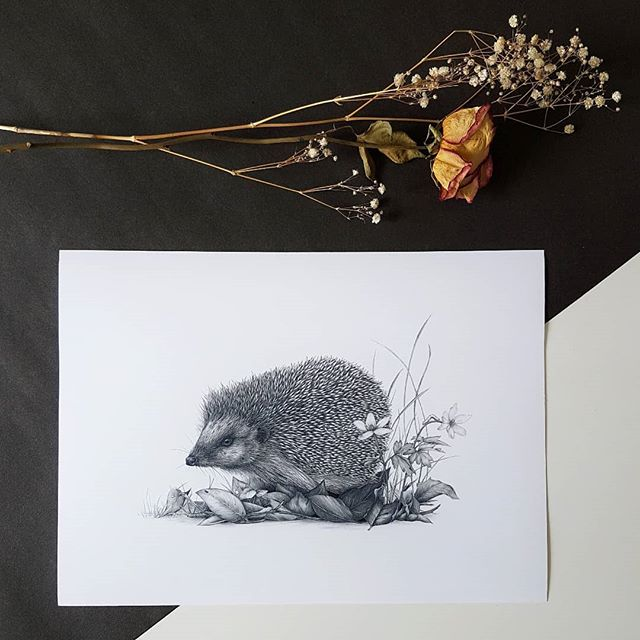 'Amongst the anemones' open edition print 🦔 Everybody loves a hedgehog right?! ⠀⠀⠀⠀⠀⠀⠀⠀⠀ I used to do some volunteer work at a wildlife rescue, and one of these guys went for me whilst I was placing his food in the cage! 😂 He clamped down on my finger and wasn't keen on letting go, getting something with spikes to let go is kinda tricky!! My Mum found it amusing however as she watched my plight! Clearly hedgehogs have beef with me which is fair enough! ⠀⠀⠀⠀⠀⠀⠀⠀⠀ ⠀⠀⠀⠀⠀⠀⠀⠀⠀ ⠀⠀⠀⠀⠀⠀⠀⠀⠀ ⠀⠀⠀⠀⠀⠀⠀⠀⠀ #art #artist #artwork #kerryjane #gallery #picturewall #painting #drawing #decor #gallerywall #prints #onthewall #style #home #wallart #artfinder #artforsale #artforthehome #originalart #hedgehog #hedgehoglover #hedgehogsofinstagram #hedgehogsogig #britishwildlife #animals #wildlifeartist #hedgehogart #hedgehogdrawing #blackworknow #theybite!!