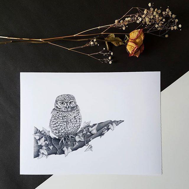 """Athene noctua"" which is just the fancy scientific name for Little Owl! ⠀⠀⠀⠀⠀⠀⠀⠀⠀ The Little Owl was considered to be a guide and messenger to Athena, the Greek goddess of love. Thought you'd like that little nugget of useless information! ⠀⠀⠀⠀⠀⠀⠀⠀⠀ I just love how they always look so miffed! ⠀⠀⠀⠀⠀⠀⠀⠀⠀ ⠀⠀⠀⠀⠀⠀⠀⠀⠀ ⠀⠀⠀⠀⠀⠀⠀⠀⠀ ⠀⠀⠀⠀⠀⠀⠀⠀⠀ ⠀⠀⠀⠀⠀⠀⠀⠀⠀ #littleowl #owl #owlsofinstagram #owlart #owllove #athenenoctua  #bird #birdart #birdartwork #birdartist #ornithology #birdnerd #birddrawing #birdstagram #ilovebirds #igbirds #feather #feather_perfection #art #artist #artwork #kerryjane #gallery #picturewall #decor #prints #artfinder #artforsale #artforthehome #birdofprey"