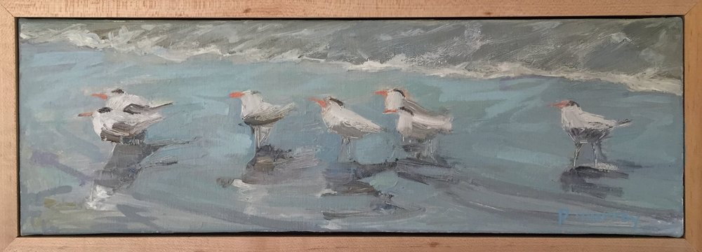 Caspian Terns at Rest