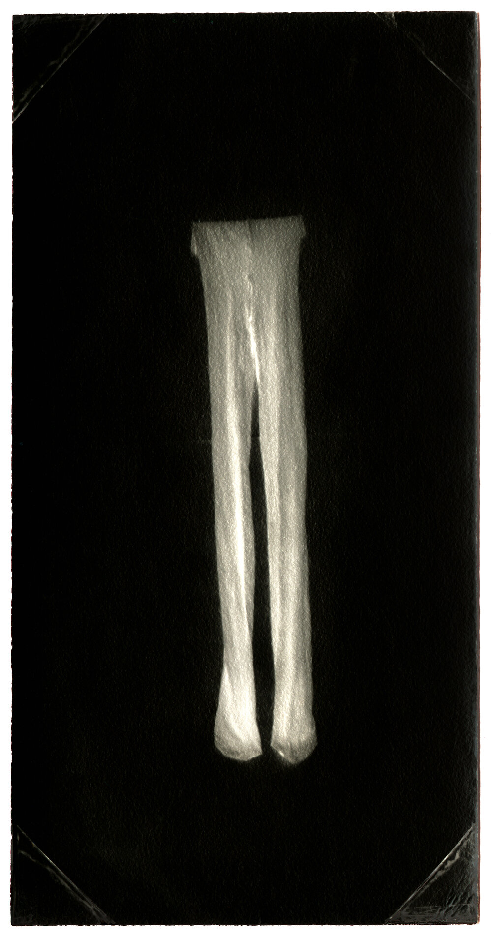 Untitled (Stretched Tights) . Toned gelatin silver print. 3 1/2 x 1 1/2 in.