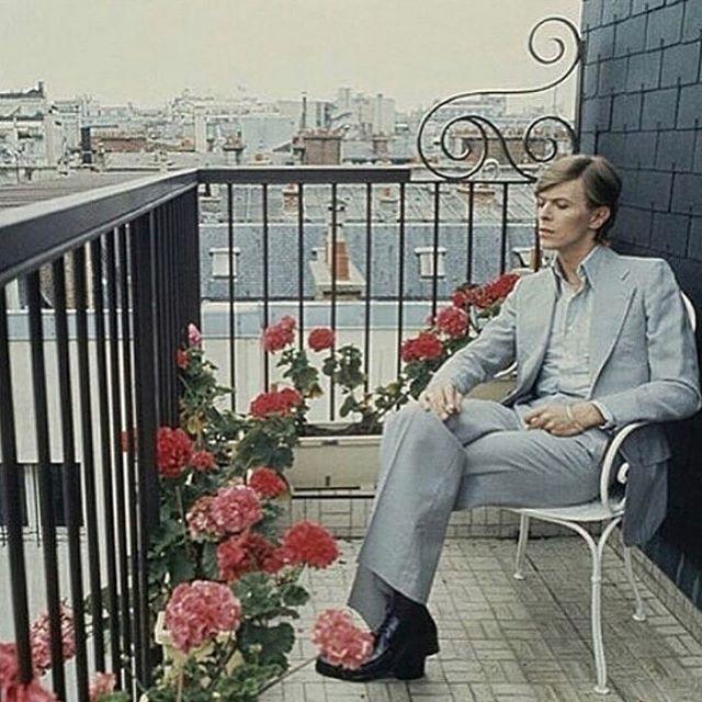 Bowie was def a Wildflower #mood. • • • #befree #drinkwildflower #drinkinthemoment #cocktails #drinkrecipes #texas #instadfw #vsco #dallas #vodka #cocktail #cocktailporn #texasvodka #smallbatch #bloodorangevodka #bloodorange #wildflower #texaswildflower #packagedesign #liquor #inspo  #dallas #stufftodo #cocktails #flowers #craftvodka #monday