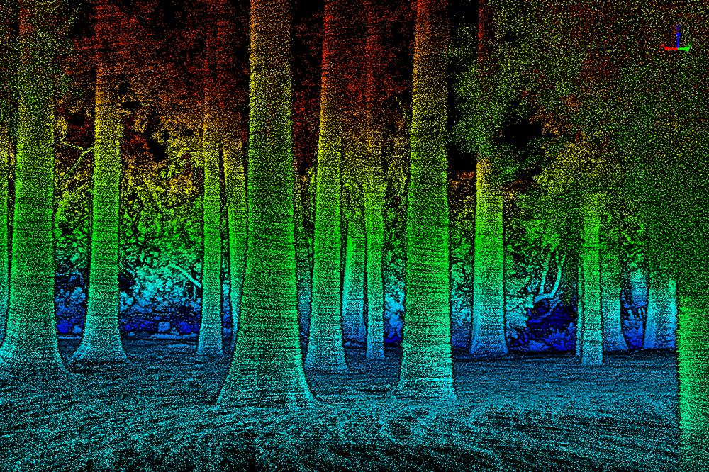 eucalyptus_photo-compare.png