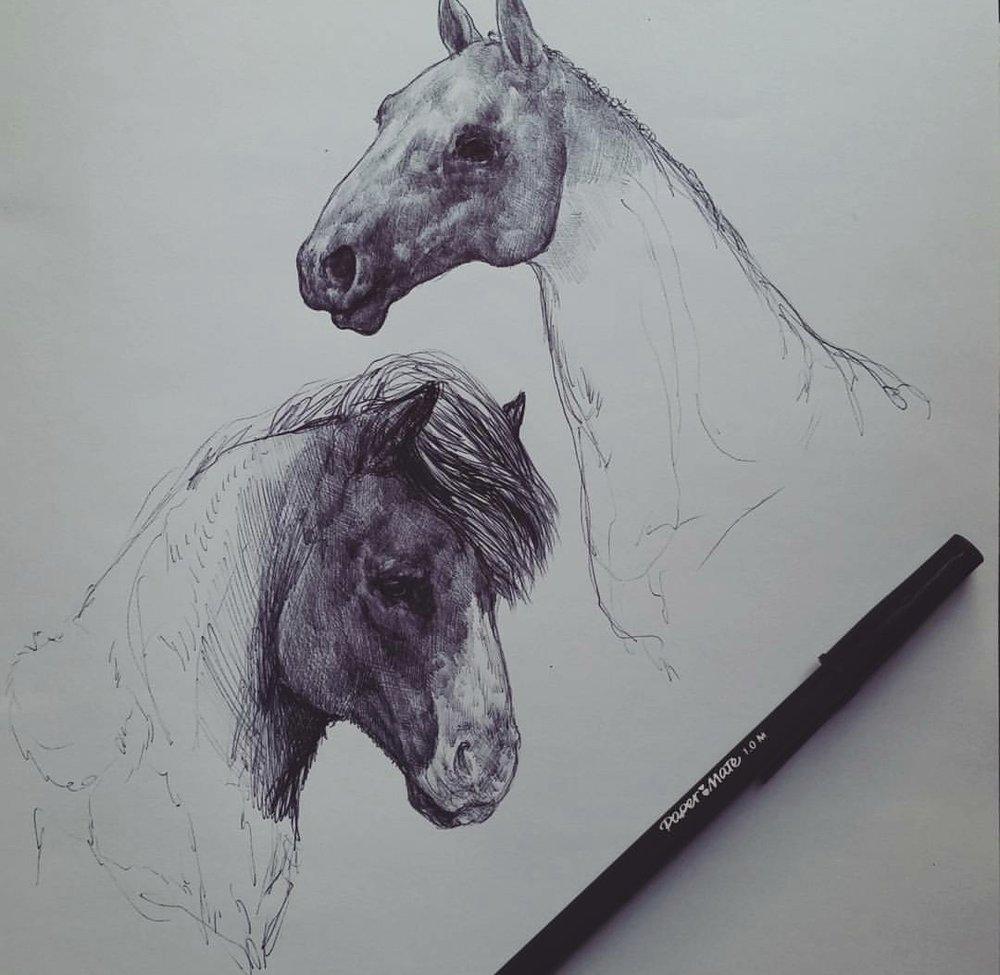 Horse Study , ballpoint