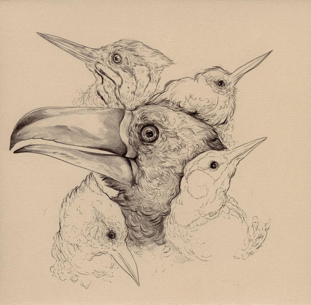 Piciformes Album Cover.jpg