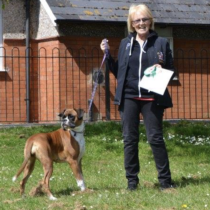 Somerset Dog Training | Sue Hale