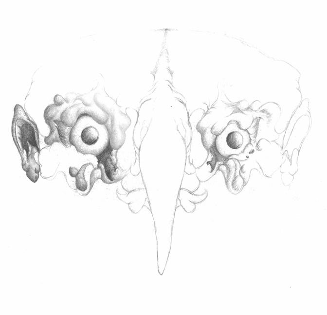 Owl-Again.png