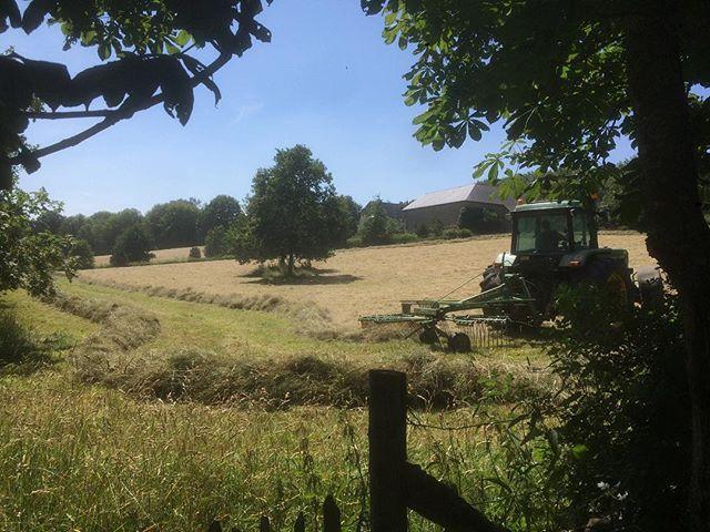 Endainage sous le soleil. #dreamfarm #hay #summertime