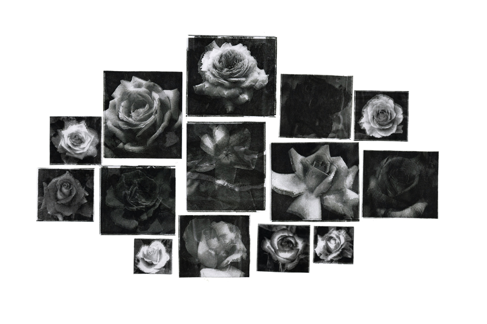Encyclopedia of Roses, 2016 (Inkjet Monoprints on Board)