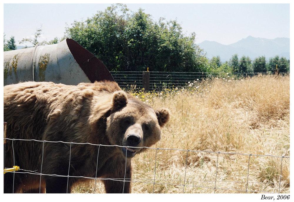 Bear, 2006