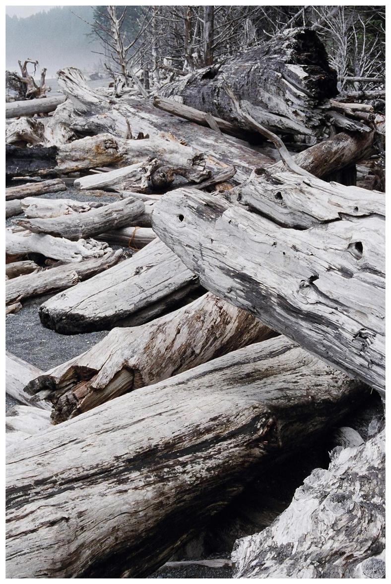 Petrified Wood, 2006