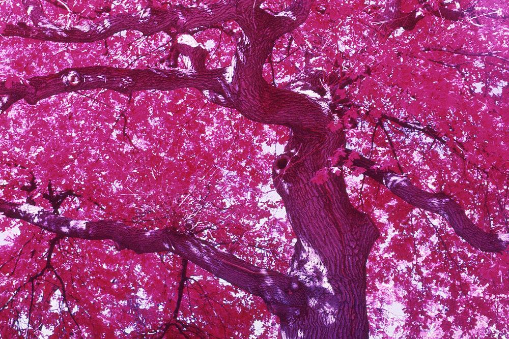 Salem (Infrared), 2017